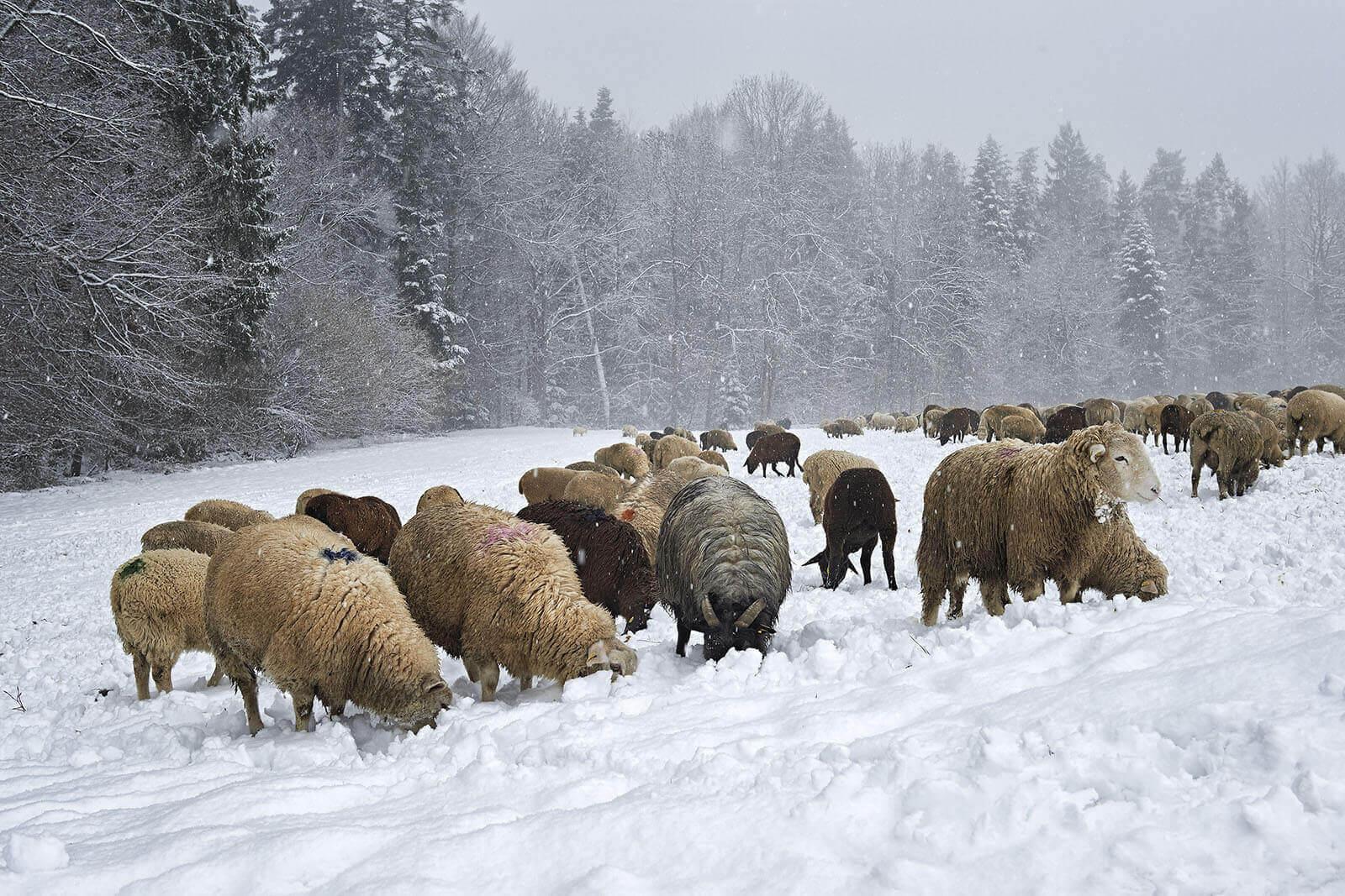Landwirt_Rudy_Canonica_3269.jpg