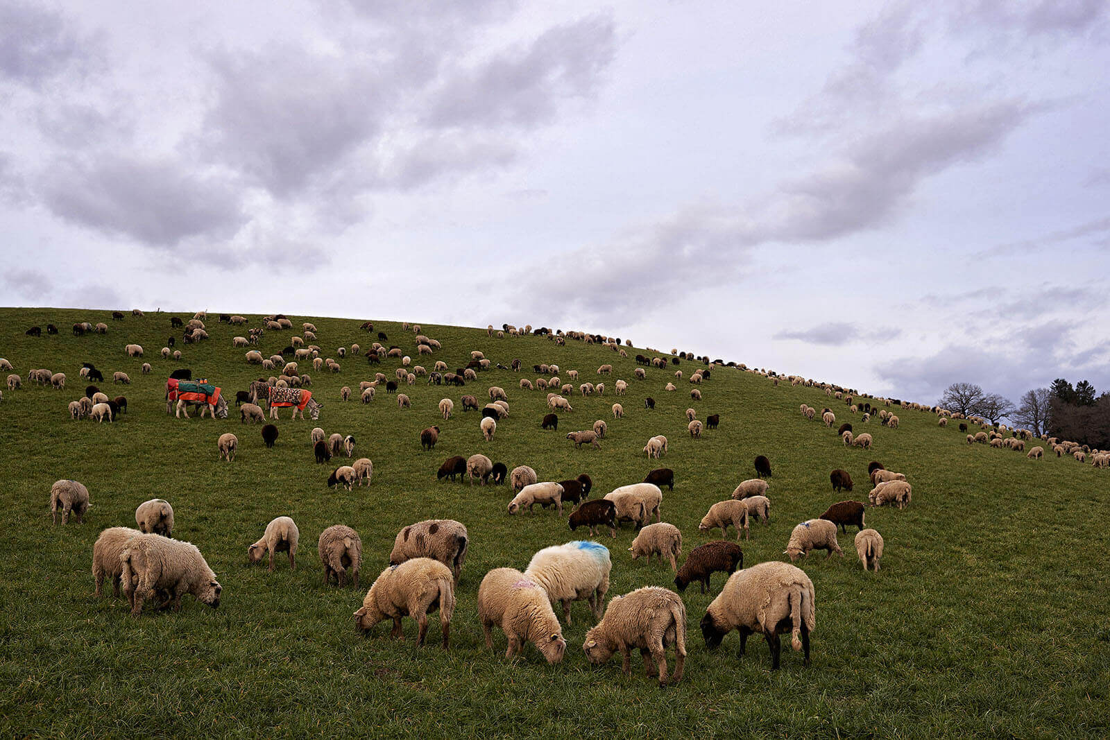 Landwirt_Rudy_Canonica_2641.jpg