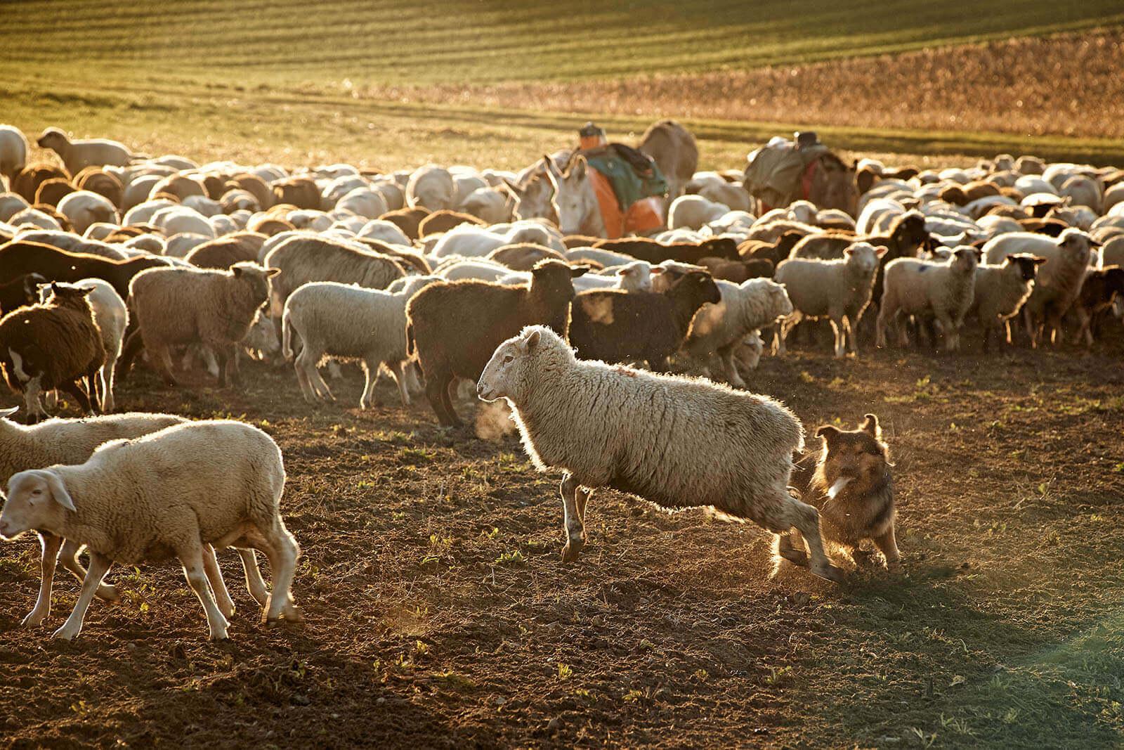 Landwirt_Rudy_Canonica_4238.jpg